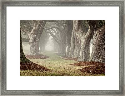 Misty Morning Avenue Of Oaks Framed Print by Barbara Northrup