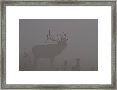 Misty Morning Bull Elk Framed Print by Doug McPherson