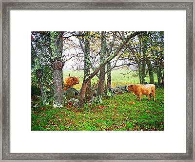 Misty Morning Conversation Framed Print