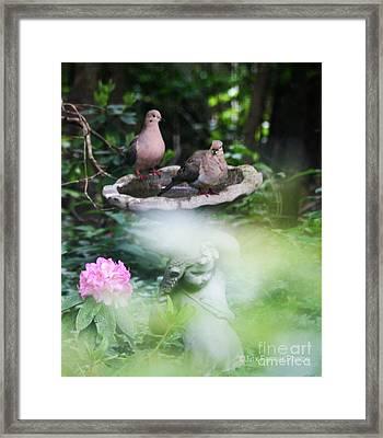 Misty Morning Doves Framed Print by Jinx Farmer