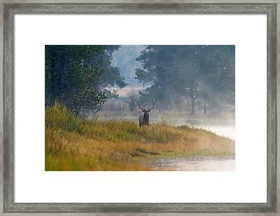 Misty Morning Elk Framed Print