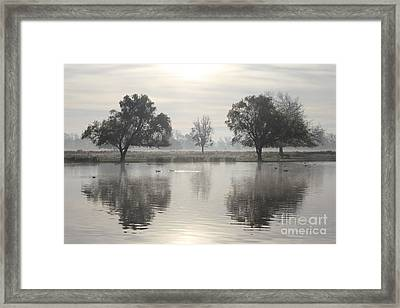 Misty Morning In Bushy Park London 2 Framed Print