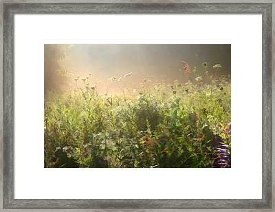 Misty Morning Framed Print by John Robichaud