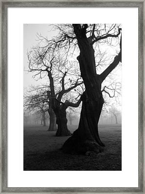 Misty Morning Framed Print by Mark Rogan