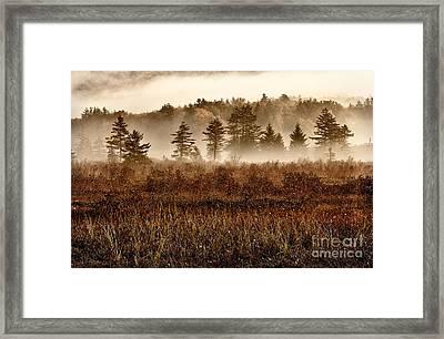 Misty Morning Meadow II - Cranberry Wilderness Framed Print by Dan Carmichael