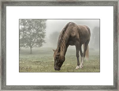 Misty Morning Framed Print by Peter Lindsay