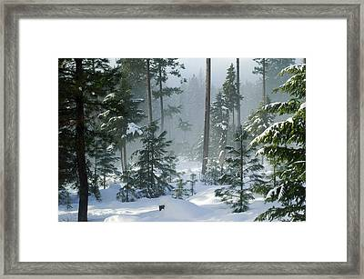 Misty Morning Snow Framed Print by Annie Pflueger
