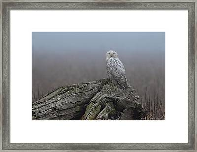 Misty Morning Snowy Owl Framed Print by Daniel Behm