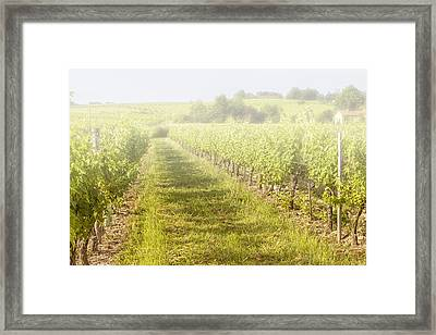 Misty Morning Vineyard Framed Print