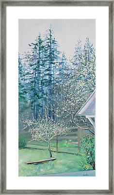 Misty Morning With Apple Blossoms And Redwoods Framed Print by Asha Carolyn Young