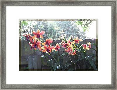 Misty Orchids Framed Print by Ginny Schmidt