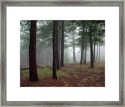 Misty Pines Landscape In Colorado Framed Print by Julie Magers Soulen