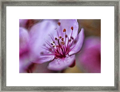 Framed Print featuring the photograph Misty Plumb by Robert Culver