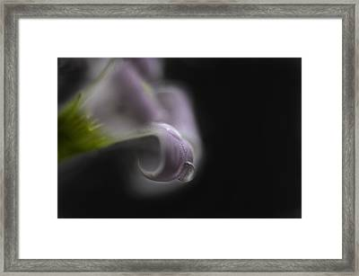 Misty Shamrock 1 Framed Print