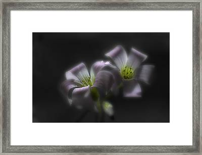 Misty Shamrock 2 Framed Print