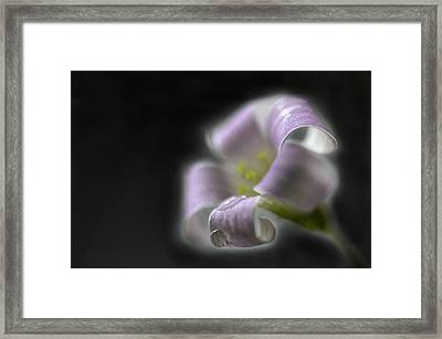 Misty Shamrock 3 Framed Print