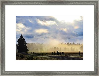 Misty Spring Morning Framed Print by Annie Pflueger