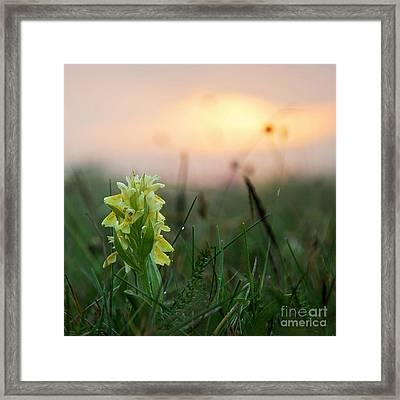 Misty Sunset Orchid Framed Print by Kennerth and Birgitta Kullman