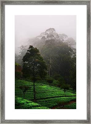 Misty Tea Plantations In Nuwara Eliya  Framed Print by Jenny Rainbow