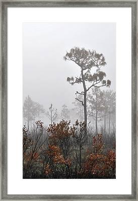 Misty Tree Framed Print