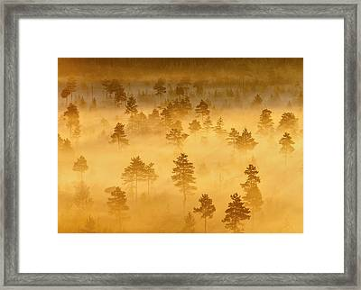 Misty Trees In The Morning Framed Print by Teemu Tretjakov