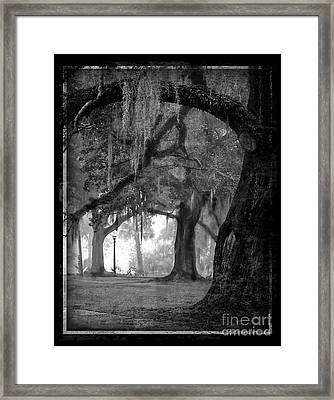Misty Walk Through The Oak Trees Framed Print