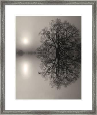 Misty Water Oak Framed Print