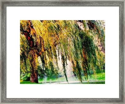 Misty Weeping Willow Tree Dreams Framed Print by Carol F Austin