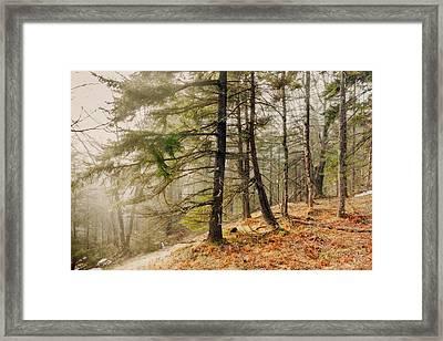 Misty Woodland Framed Print by Robert Clifford