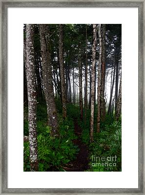 Misty Woods At Mt. Mitchell Framed Print