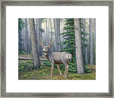 Misty Woods-buck Framed Print