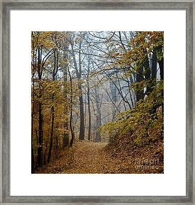 Misty Yellow Framed Print by Barbara McMahon
