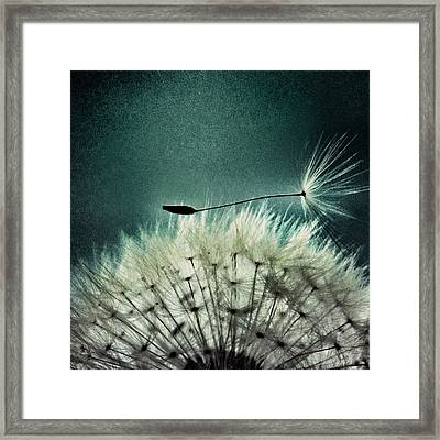 Misunderstood  Framed Print