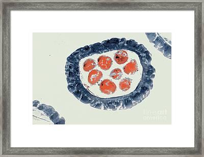 Mitochondria Come Knocking Framed Print by Joe Pratt