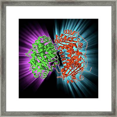 Mitochondrial Processing Peptidase Framed Print by Laguna Design
