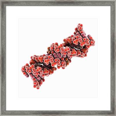 Mitochondrial Ribonucleic Acid Framed Print by Laguna Design