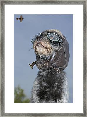 Mixed Breed Dog Dressed In Leather Cap Framed Print