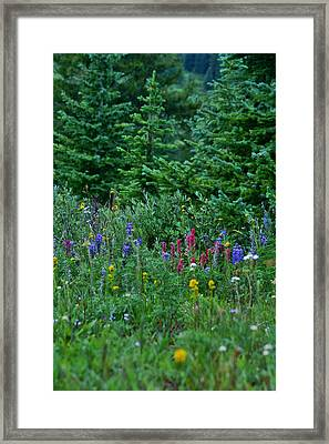 Framed Print featuring the photograph Mixed Flowers by Jeremy Rhoades