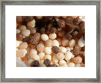 Mixed Papaya Seed Framed Print by Belinda Lee