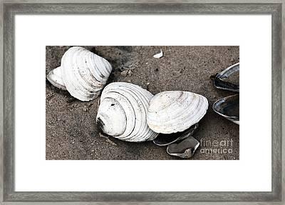 Mixed Shells Framed Print by John Rizzuto