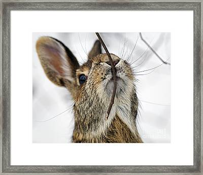 Mmm.. I Like Twiggy... Framed Print