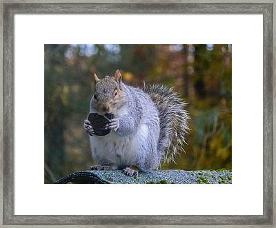 Mmm..oreo Framed Print by Heather Sylvia