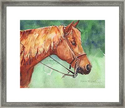 Horse Watercolor Named Mo Framed Print by Maria's Watercolor