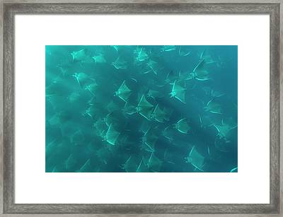 Mobuyla Rays Framed Print by Christopher Swann
