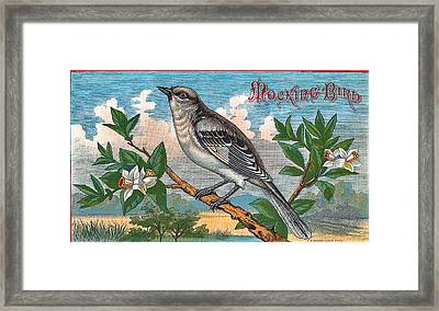 Mocking Bird Framed Print