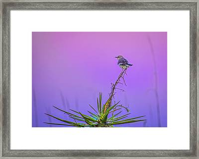 Framed Print featuring the photograph Mocking The Yucca by Rob Sellers