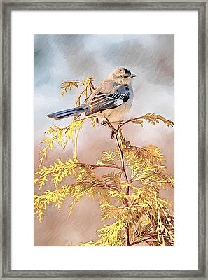 Mockingbird Framed Print by John Haldane