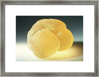 Model Of Pine Pollen Framed Print by Dorling Kindersley/uig