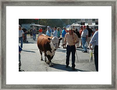 Modern Cowboy Framed Print by Paul Harris