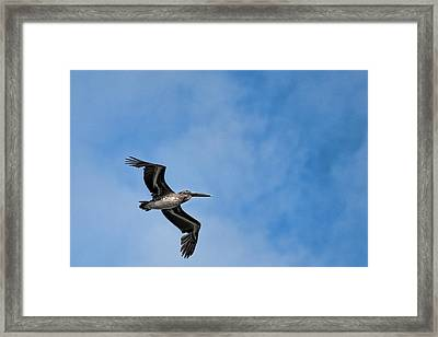 Modern Day Pterodactyl  Framed Print by Frank Feliciano